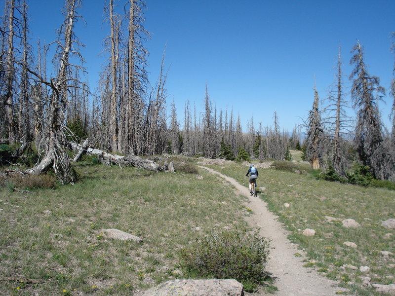 Brian head Peak Trail