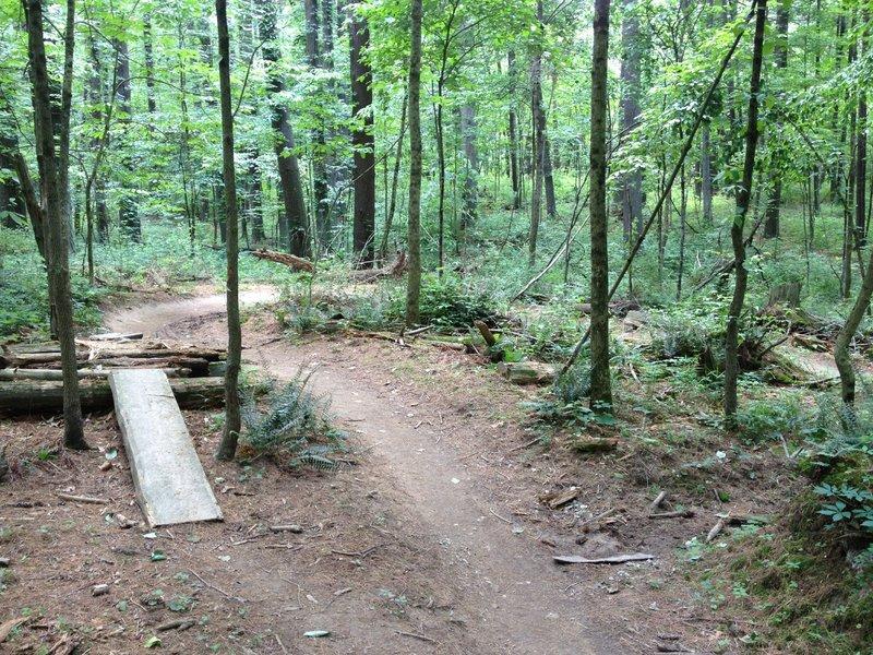 Log over practice on Pine.
