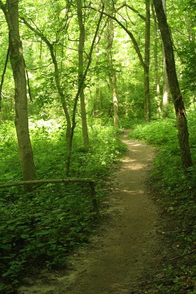 Camp Glenn beginner trail.