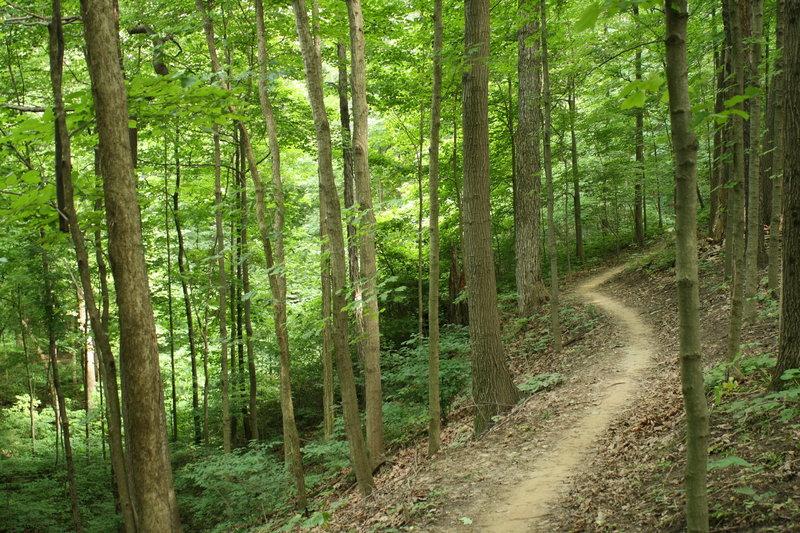 Contour trail on a hillside.