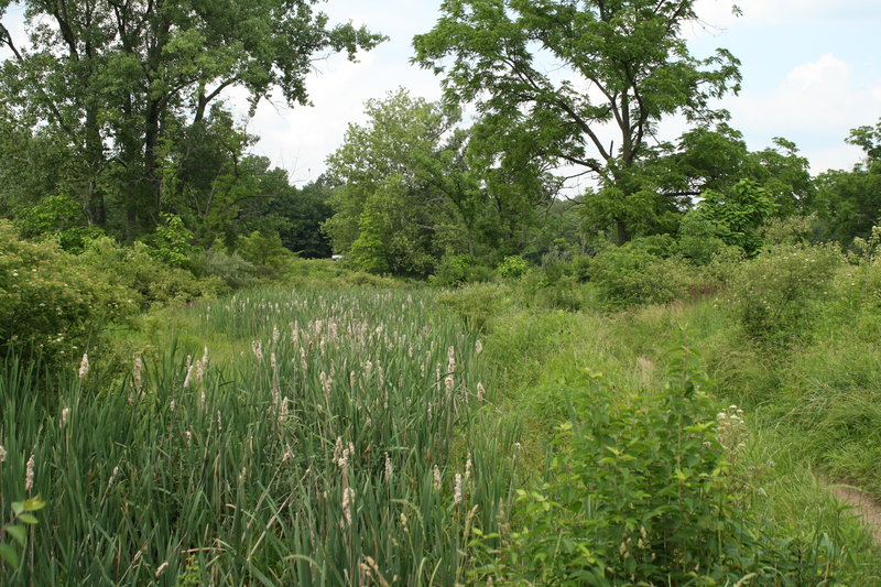 Looking out over a wetland restoration area.  Vegetation grows fast here, so the trail corridor gets pretty tight at times in spite of trimming efforts.
