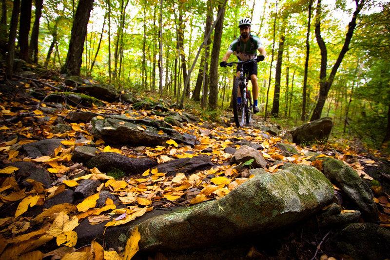 Rocks! Rocks! Rocks! Rattling Creek has classic East Coast trail texture.