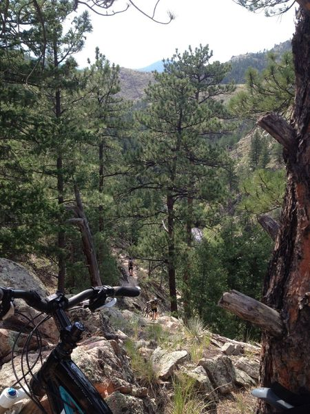 Looking down on the hike-a-bike section.  Steep steps down to / up from the creek below.