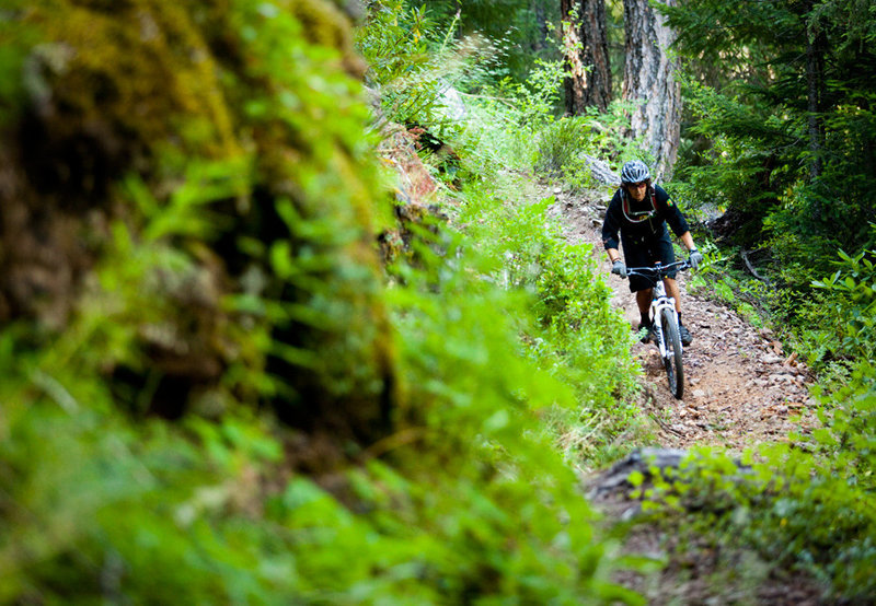 Dread and Terror is one of those most exciting sections on the Umpqua Trail with lots of tight singletrack along high cliffs