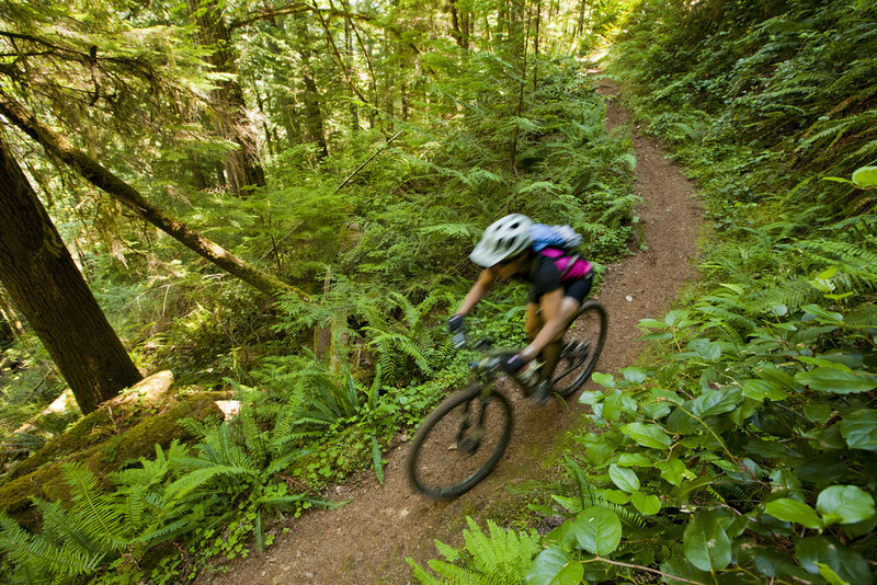 Lush ferns and sweet singletrack on the western end of the North Umpqua Trail