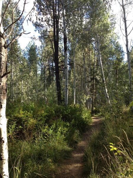 Stunning trail in Shevlin Park