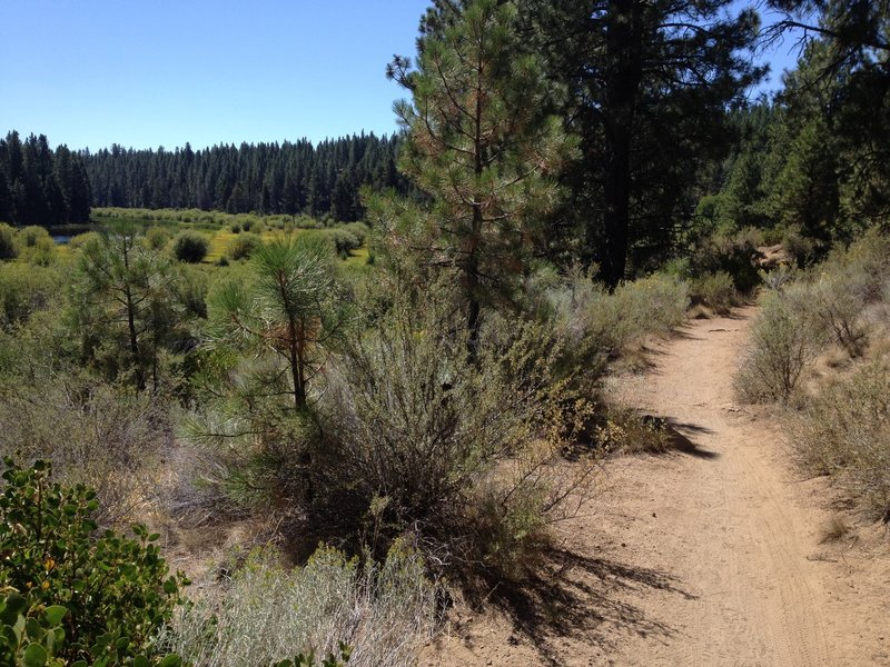 A relaxing section of the Deschutes River Trail.