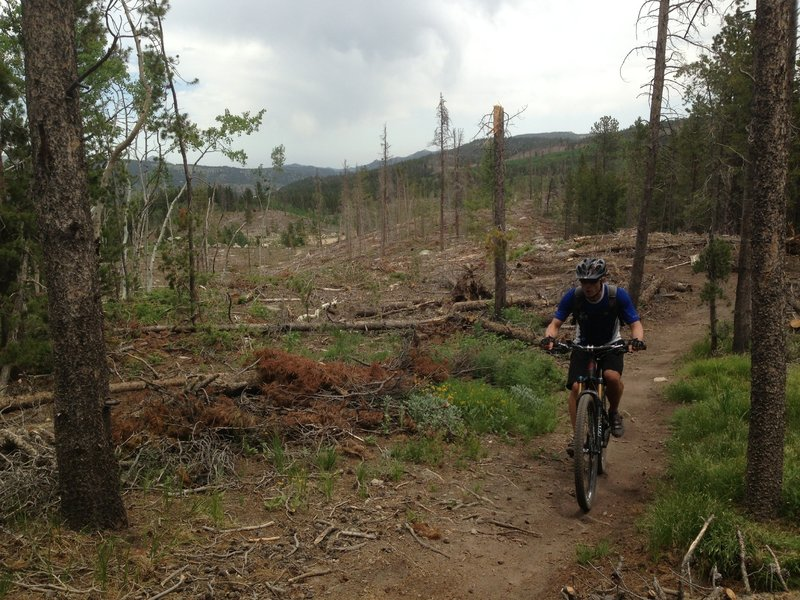 Lookout trail climbs through the edge of the deforested area - deep forest is now wide open.
