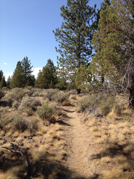 Smooth, flowing trails with excellent vistas.