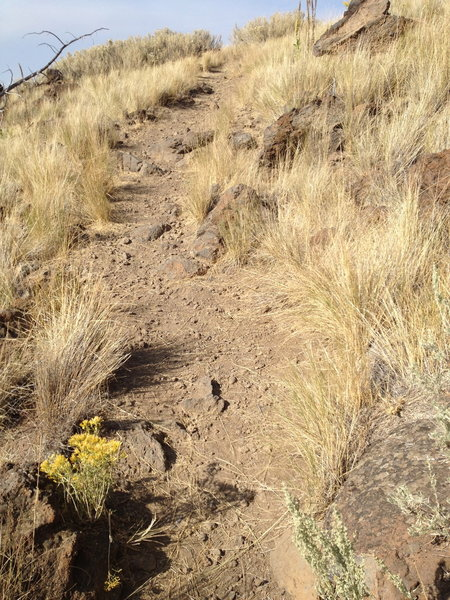 Mostly smooth trail on Horse Butte ride, except for this short section.