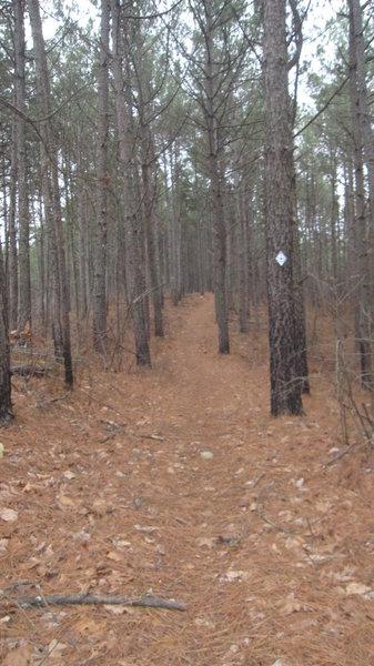 Pine Needle Hill