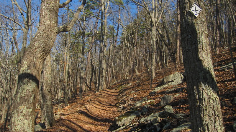 Ascent to Horn Mountain from Pilcher's Pond / Pocket Road