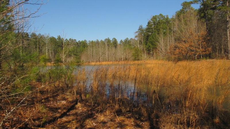 Pilcher's Pond
