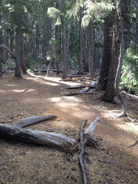 Trail along the creek