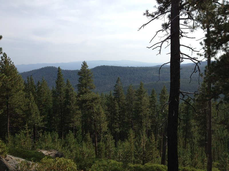 Nice views in the thick, thick forest