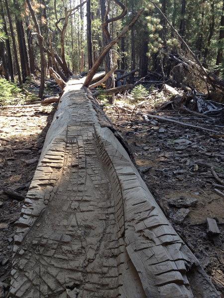 Long, intimidating log ride