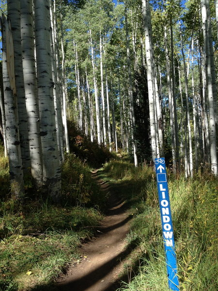 Near the beginning of the nice singletrack section of Liondown