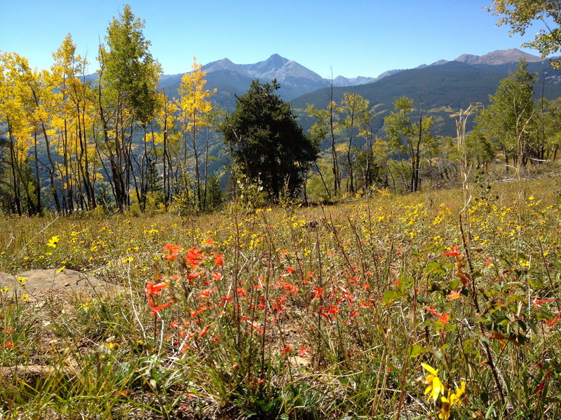 A few wildflowers left as the aspens decide it's fall.