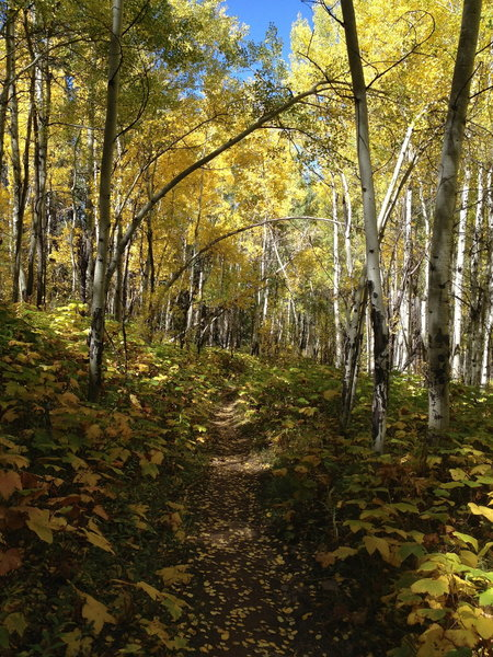 At this point, the trail alternates between nice singletrack (like this) and severely rutted and rocky terrain.