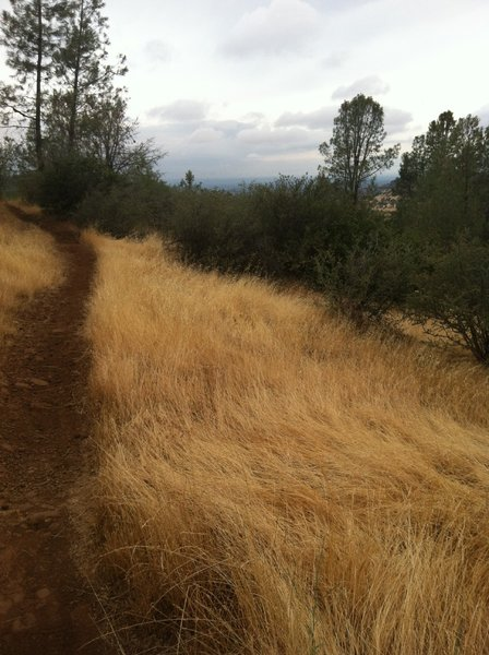 Singletrack on Guardians Trail