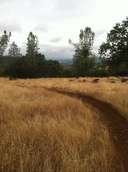 More of singletrack on Guardians Trail