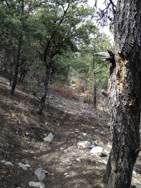 Delbert's Trail contouring along the hillside.