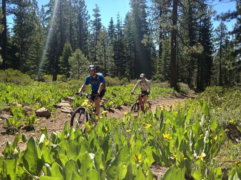 June flowers on our way up to the Tahoe Rim Trail