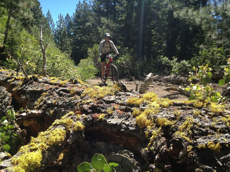 A flat section of the Tahoe Rim Trail