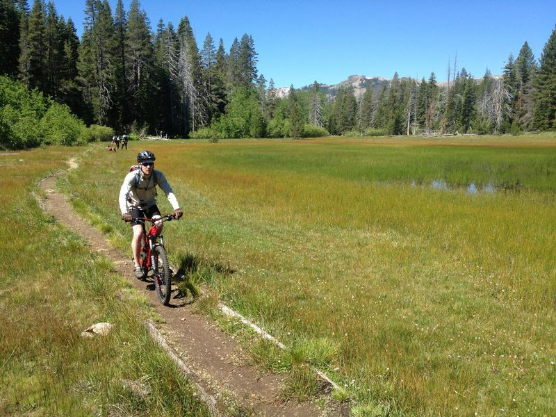 On the Tahoe Rim Trail, going through Page Meadow.