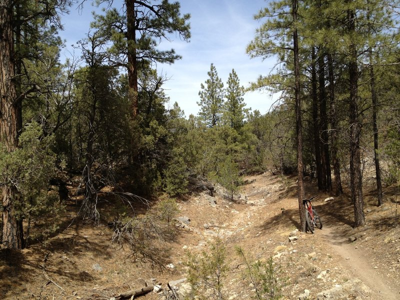 Sweet single track running down Otero Canyon.