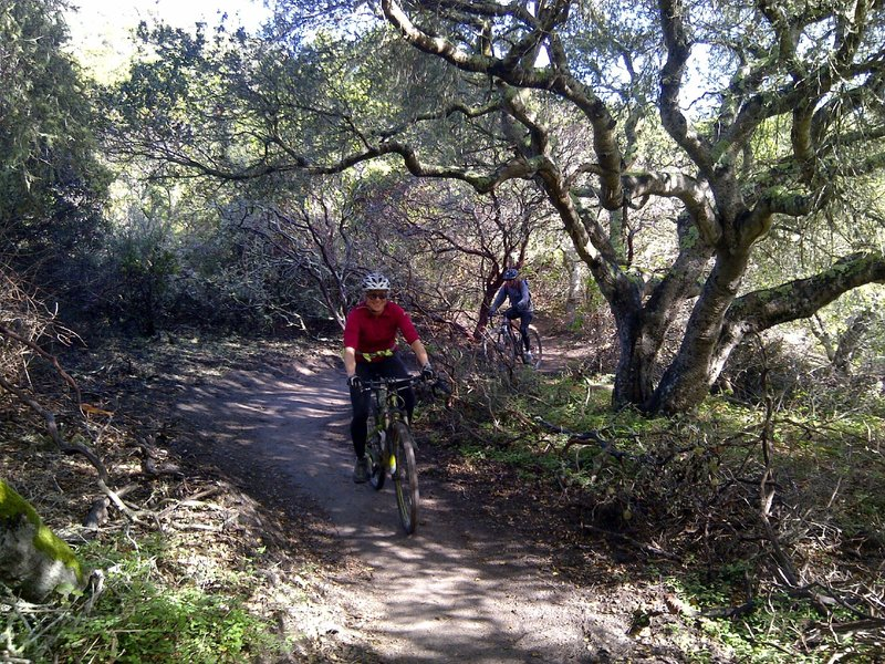 """Winding through the woods on Trail 49 (south) climbing up to """"The Rock""""."""