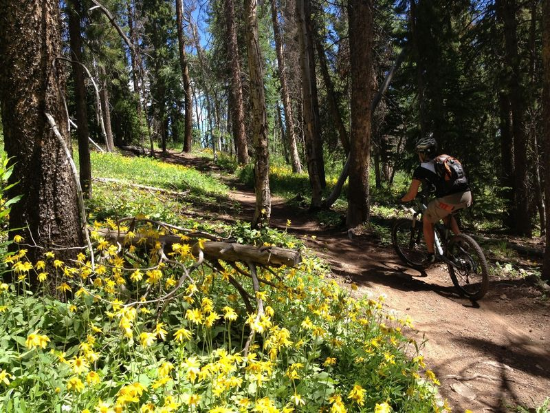 Wildflowers on Rose Pedal