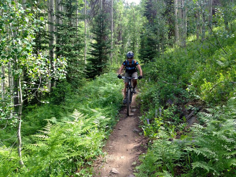Nice fern glen on Rose Pedal