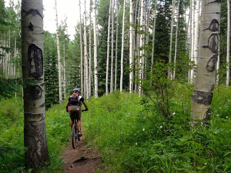 Starting the plunge through some big aspens