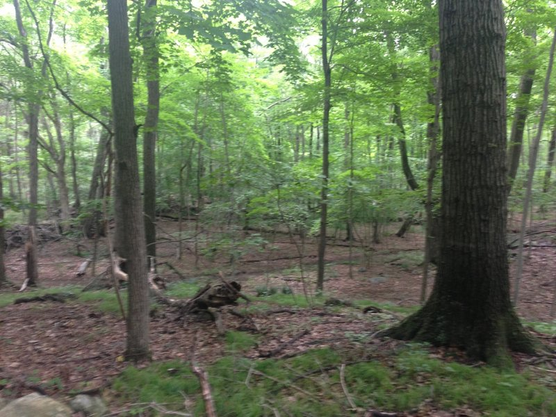 Fine singletrack in the woods.