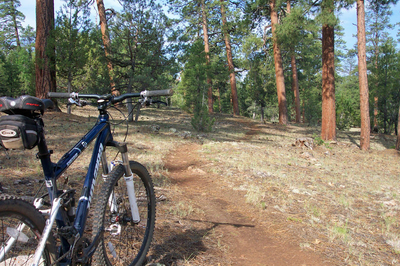Fast riding through beautiful ponderosa forest.