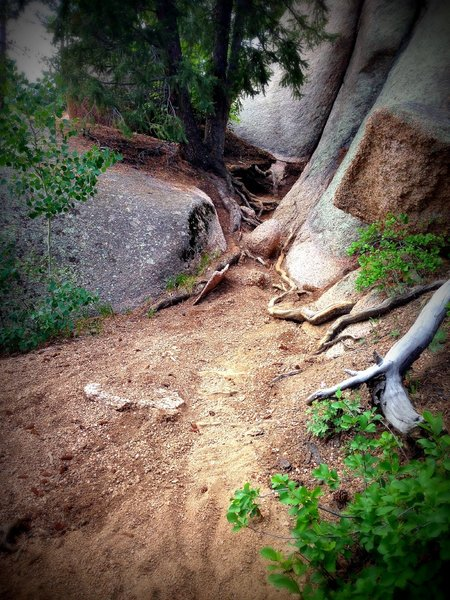 A rooty section of trail, that most riders will walk.
