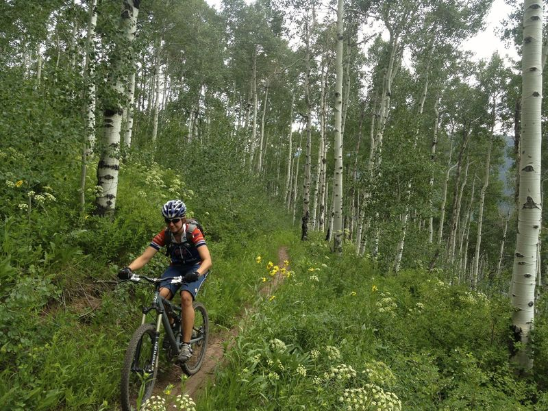Over the big climb, you enter cool, flatter forested terrain.