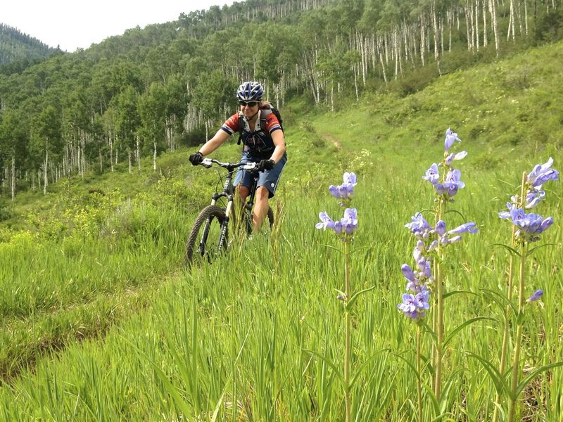 Tired of aspen forest?  How about a meadow with wildflowers?