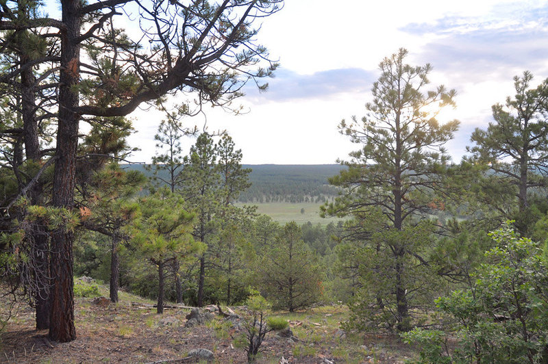 View from Sawmill Trail looking west towards Hilso Trailhead.