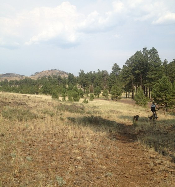 On the AZ trail north of the peaks