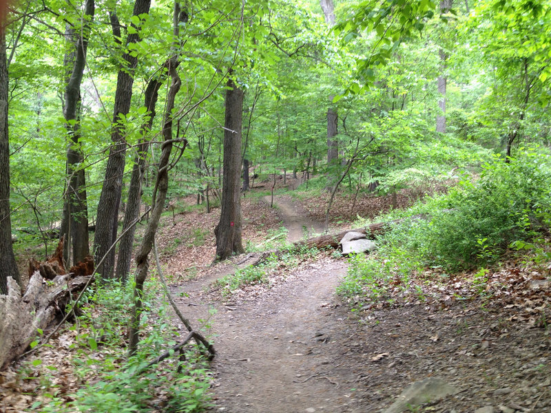 An example of common Red/Blue Blaze Trail terrain and optional features along the side of the trail.