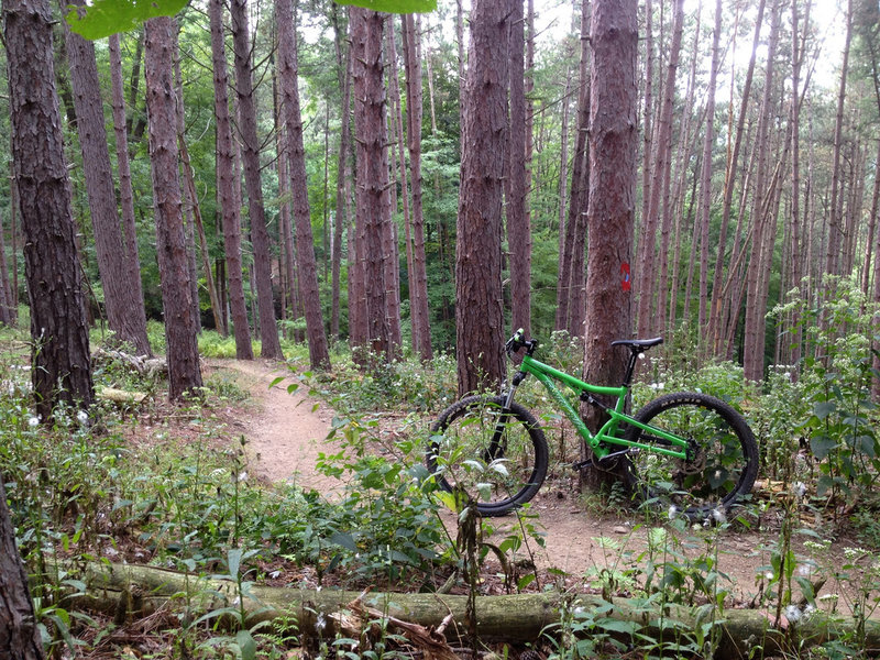 multiple sections of trail dissect pine forests.