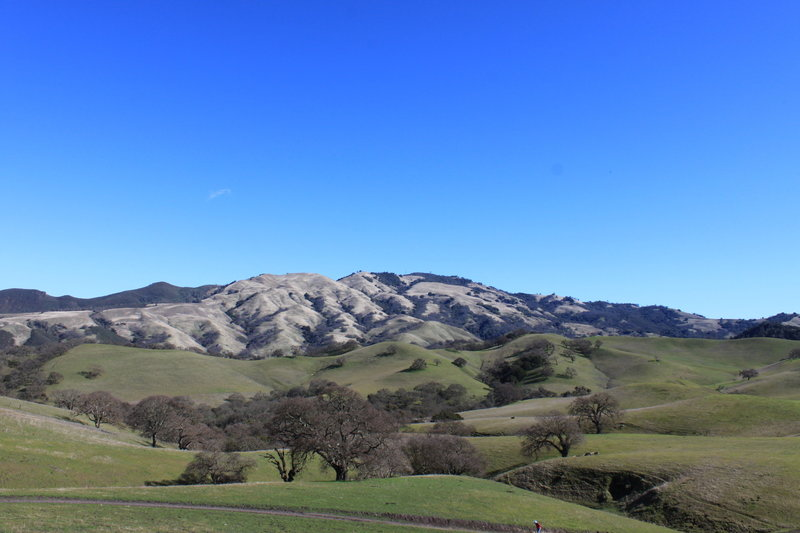 Mt Diablo - zoom in on the ridge right in the middle and you can see Burma Rd. trail switching back and forth down the ridge - an amazing descent 1400 ft in a little over 2 miles