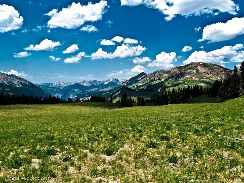 High Alpine Meadow Beauty