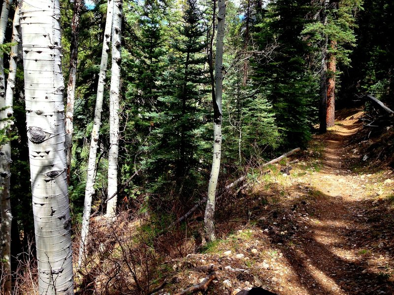 In between overlooks, the trail winds through forests and small canyons