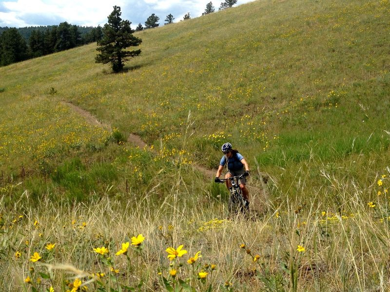 My favorite part of Rawhide Trail - fast, flowing singletrack filled with flowers.