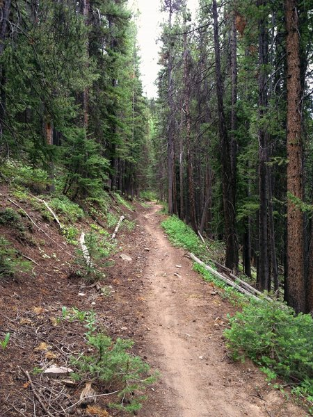 Looking up the Tinpot trail.