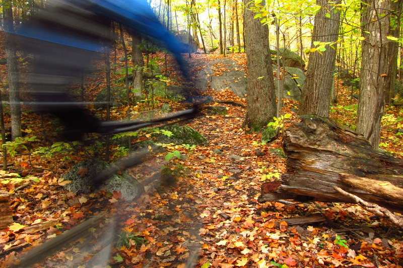 Sampling Kanata's finest singletrack within the South March Highlands Conservation Forest.