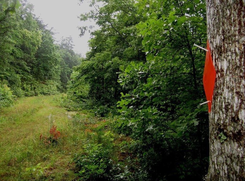 Orange blazes mark the loop